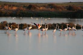 Ria Formosa Nature Tours