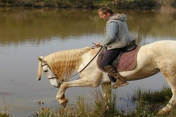 holistic horesback ridingin the western algarve, horse at water