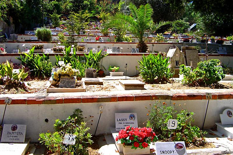 Lisbon Zoo Pet Cemetery cemiterio caes