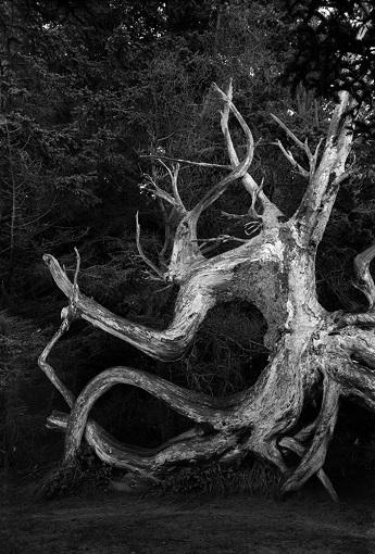 looking at trees exhibition, photography joe jose reis